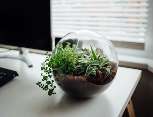 5 plantas de interior para purificar el aire de tu casa o oficina