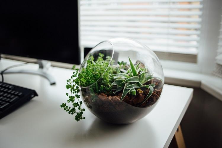 5 plantas de interior para purificar el aire de tu casa o oficina ...
